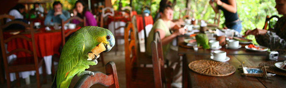 Amazon Lodges of Brazil