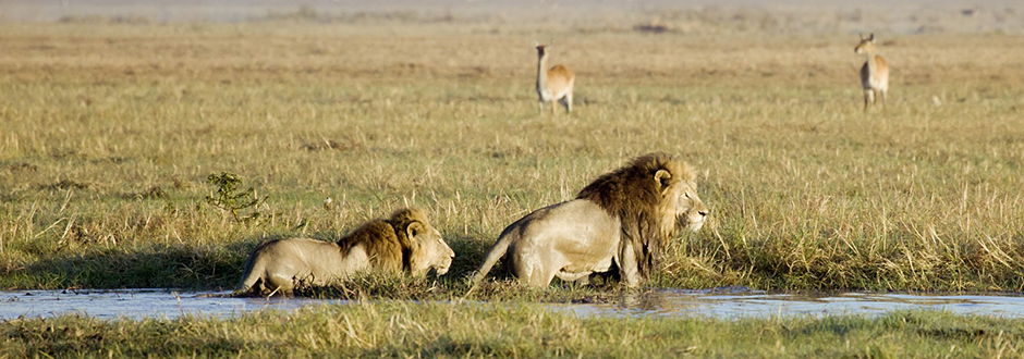 Africa Tours and Safaris in Victoria Falls and South Africa