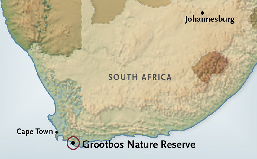 Grootbos Nature Reserve | South Africa Vacation