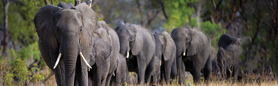 Botswana, Victoria Falls and Zimbabwe