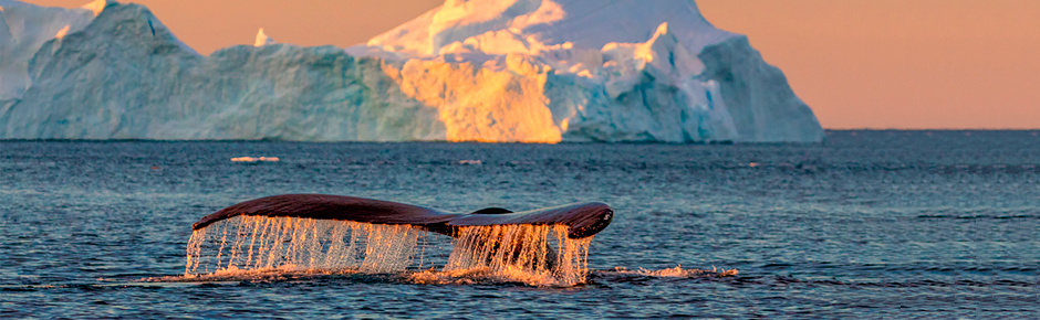 Greenland Humpback Whale Cruise Photos