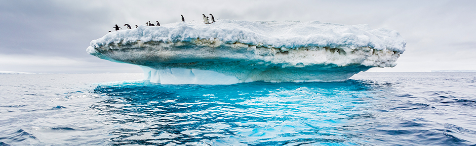 Expedition Cruise to Antarctica - 11 Day Adventure